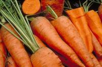 carottes compressées